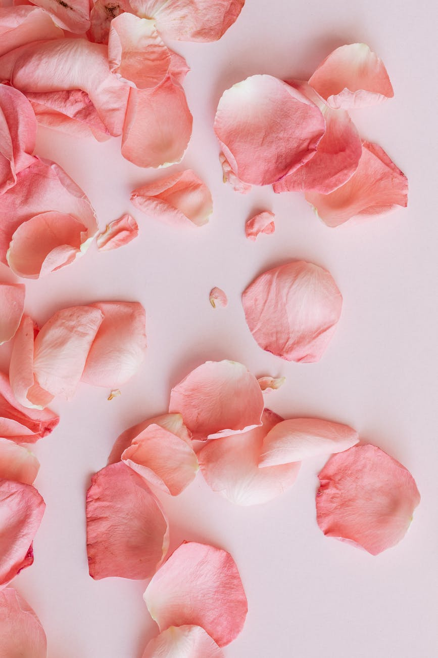 delicate petals of roses on pink table